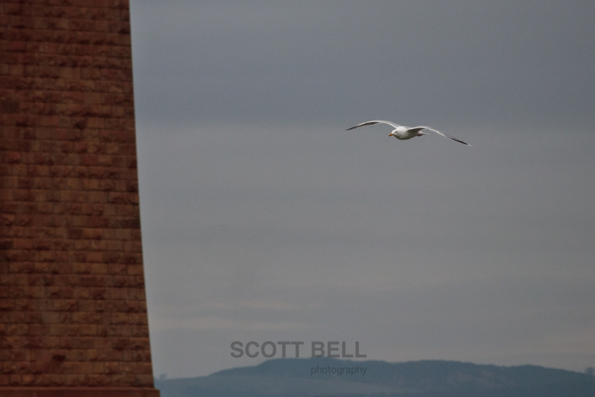 gull under bridge